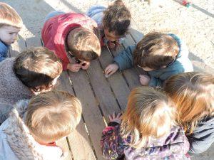 Un grup de nens/es miren el cargol a sobre d'una taula